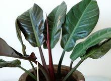 نباتات زينة داخلية للبيع.