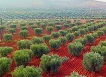 مزرعه جميله جدا للبيع بسعر مغري حوض الخوام الشمالي