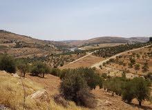 ارض مميزة جدا 3700م ام رمانة شفا بدران بيرين اطلالة خلابة مزروعة زيتون