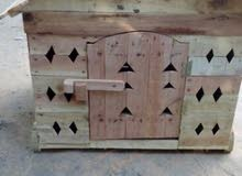 بيوت كلاب خشب شجر