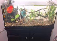 fish thank