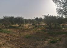 مزرعة للبيع في ام الرصاص مع بير مرخص