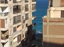 Sidi Beshr apartment is up for rent - Alexandria