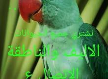 مطلوب جميع الطيور والببغوات الاليفة