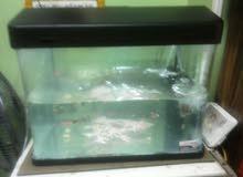 حوض سمك باللمبة