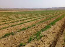 ارض زراعية بزمام العياط الاقليمي الجديد