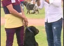 مدرب كلاب من كلية الشرطهk9