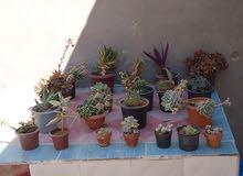 مشتل الشريف للصباريات ونباتات الزينة