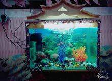 حوض اسماك مع الاسماك