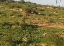 قطعة أرض للبيع قبل بئر عز الدين