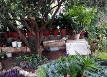 منزل مستقل في بيت رأس الحي الشرقي مع أرض للبيع بسعر مغري