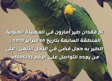 فقدان طير