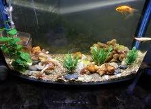 حوض سمك حجم 10 جالون مع لوازمه