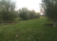 اقليم خريبكة وادي زم الضريق الوضنية وادي زم الرباط