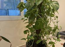 نباتات خارجيه وداخليه