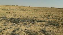 مزرعه 10 فدان بموقع مميز على الاسفلت