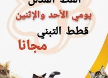 قطط التبني مجانا