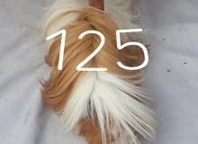 هامستر ارنب غيني عدد 6 نثية 3 فحل 3