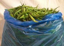 5 كيلو شطة خضراء طازجة