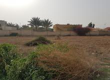 أرض للبيع في الغور الجنوبي منطقة غور  نمرين (شميساني الغور) منطقة ممتازة للمزارع