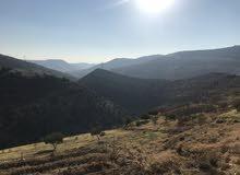 ارض أربعة دونمات باطلاله خرافيه بالسلط في وادي الأزرق