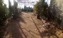 قطعة ارض في صرمان في راس الرمرام للبيع