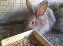مزرعه الأرنب رصيفه