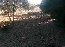 أرض للبيع 3000 متر