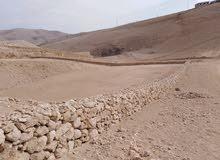 قطعة ارض 3600 متر صروت /حدد /رقم القطعه 478