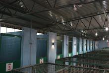 أكبر مركز تدريب كلاب وفندق في الأردن استيراد كلاب