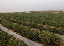 شركة دريم للاستثمار الزراعي