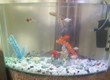 حوض سمك مع عشرين سمكة