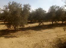 ارضي زرعية بطريق اسيوط الغربي كملت المرفق كهربا مياء شرب ميأء ري نيلي من الترعة