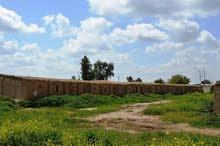 العراق . بغداد . البصام