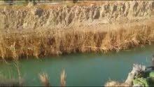 ارض زراعيه مساحة 7دونم للبيع تقع في كربلاء السواده مباشر على البزل عقد 35للبيع سعر الدونم 6مليون