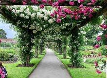 تنسيق حدائق أبوعلي 66385577