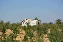 ارض زراعية للبيع بطريق الضبعة