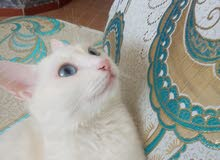 قطط ذكر و انثى
