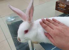 rabbit cute white