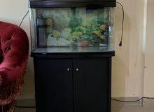حوض سمك للبيع مع الطاوله و فلتر و دفايه داخل الحوض