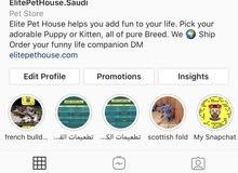 Good Quality Dogs For Sale بيع او استيراد جميع انواع الكلاب
