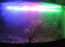 حوض سمك مع فلتر وزينة واضاءة خمسة اسماك