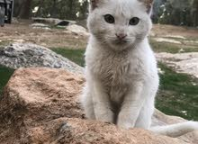 قطه بسه بيتوتي