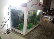 حوض سمك بجنن للبيع او البدل على كنار