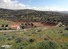 قطعة ارض مميزة زراعية في اجمل مناطق قرية المجدل من المالك مباشرة للبيع
