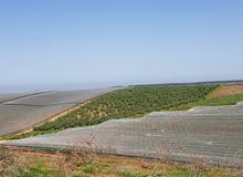 ارض للبيع مزروعة
