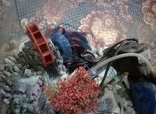 حوض سمك تفصال كامل بكل ملحقاته
