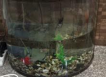 حوض سمك اجنبي متوسط الحجم مع اغراضه