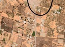 هكتار في وادي الربيع - النعم