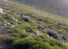 قطعة ارض بالسرو خلف جامعة عمان الاهليه